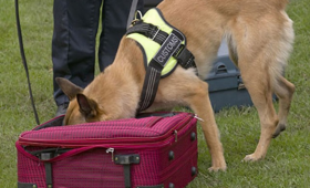 Dog training for explosives detection