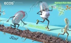 Cartoon of microbes racing along a dirt path
